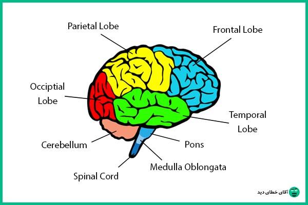 خطای دید و مغز انسان